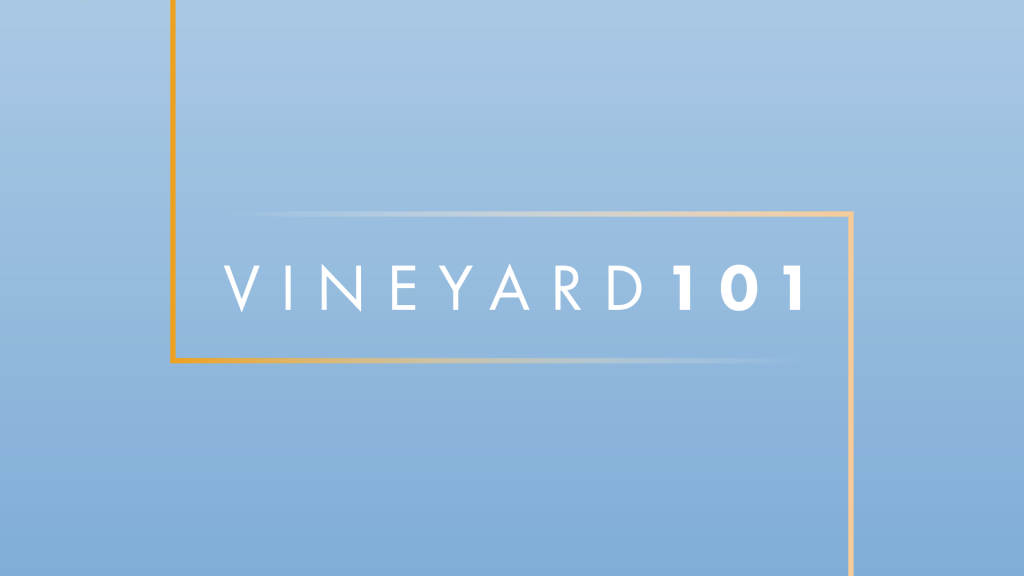 vineyard101_logo